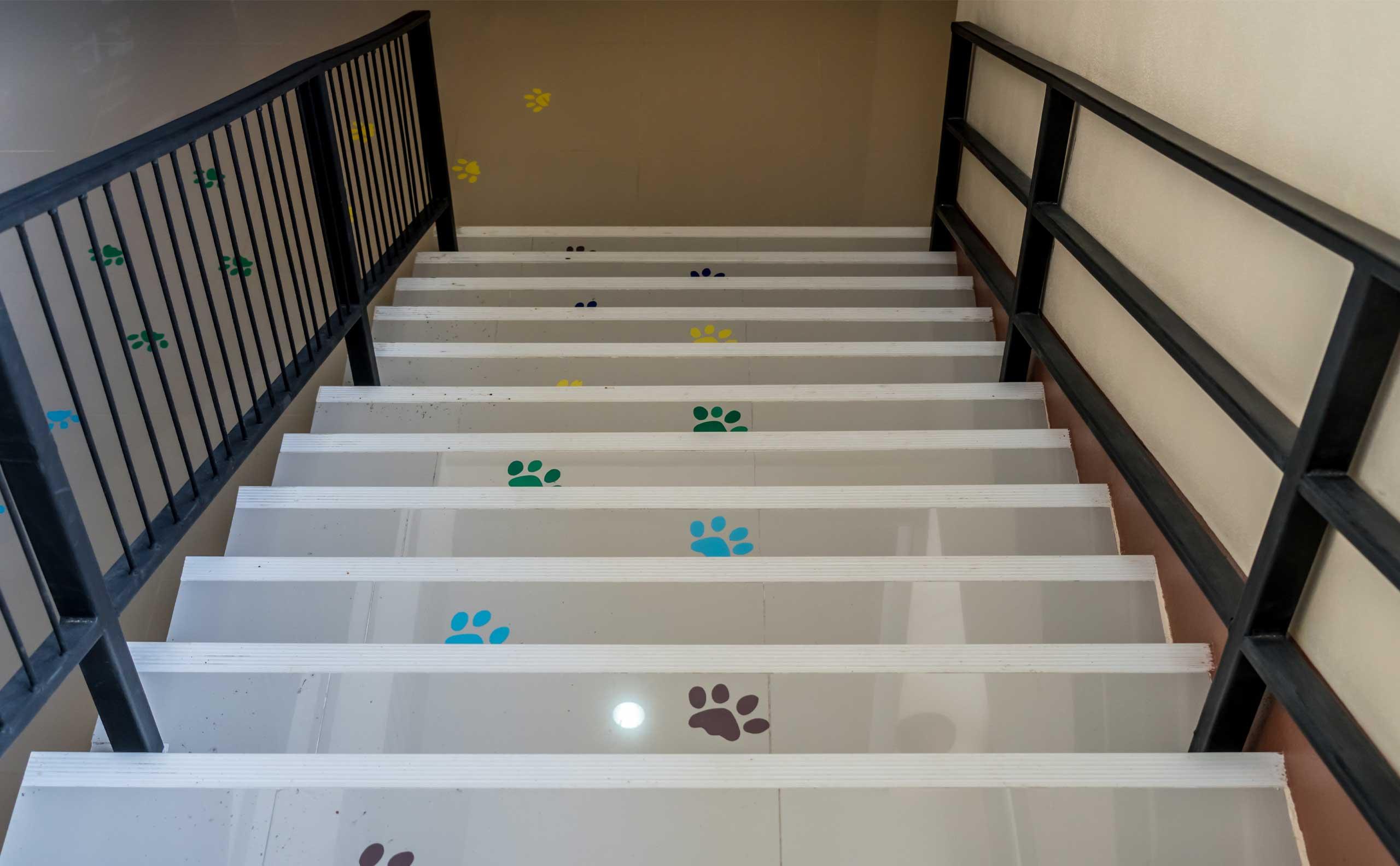 Floor decals of pawprints